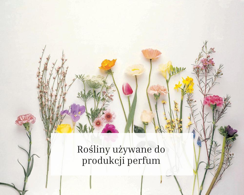 rośliny używane do produkcji perfum